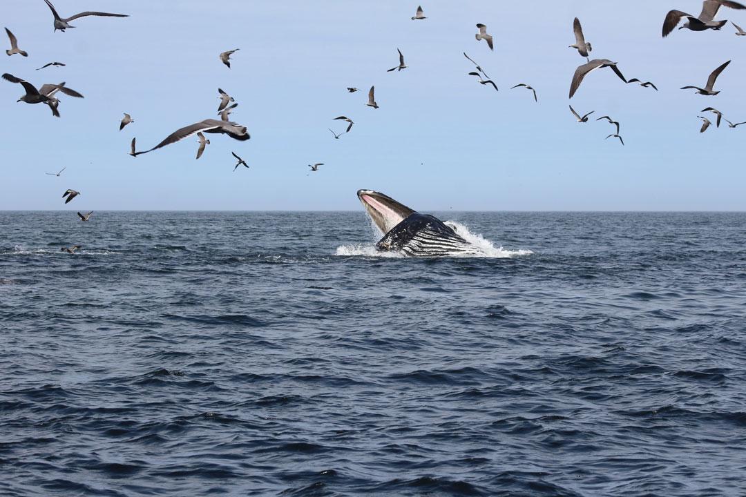 fauna-marina-cristobal-navarrete-4