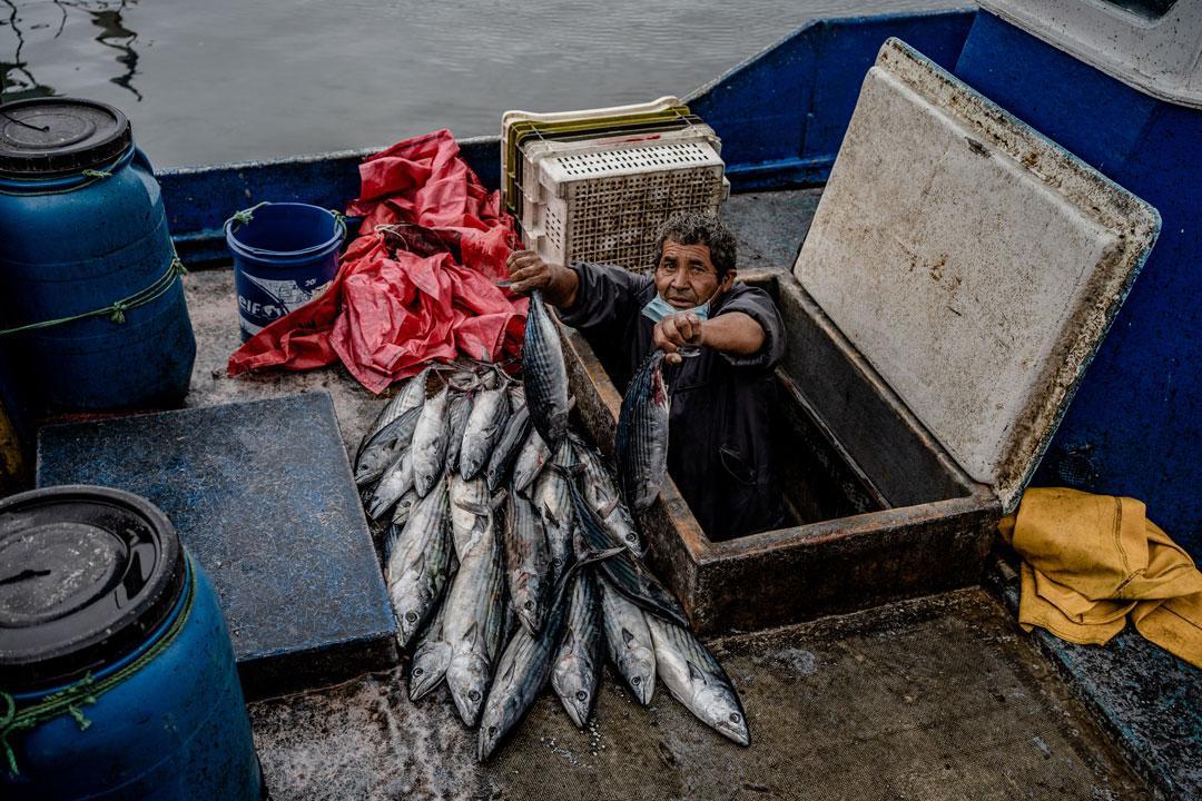 Caleta-ley-de-pesca--Foto-Franco-Miranda-3