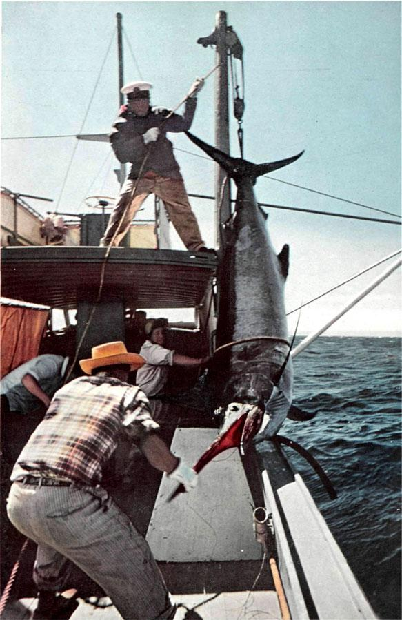 pesca-de-la-albacora-2a