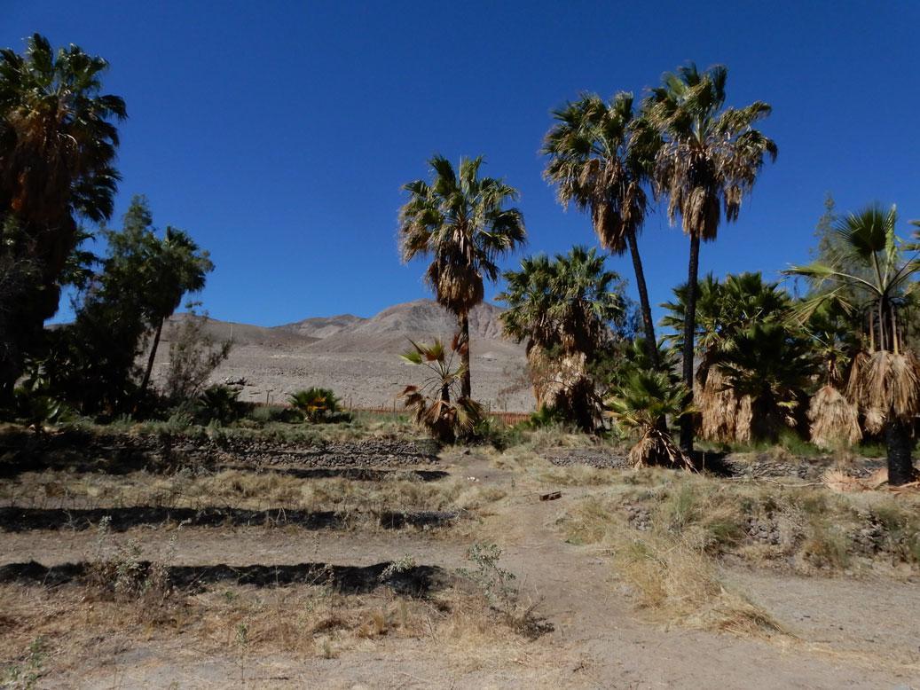 Comunidad-Indígena-Aymara-de-Casablanca,-cuenca-de-Tarapacá