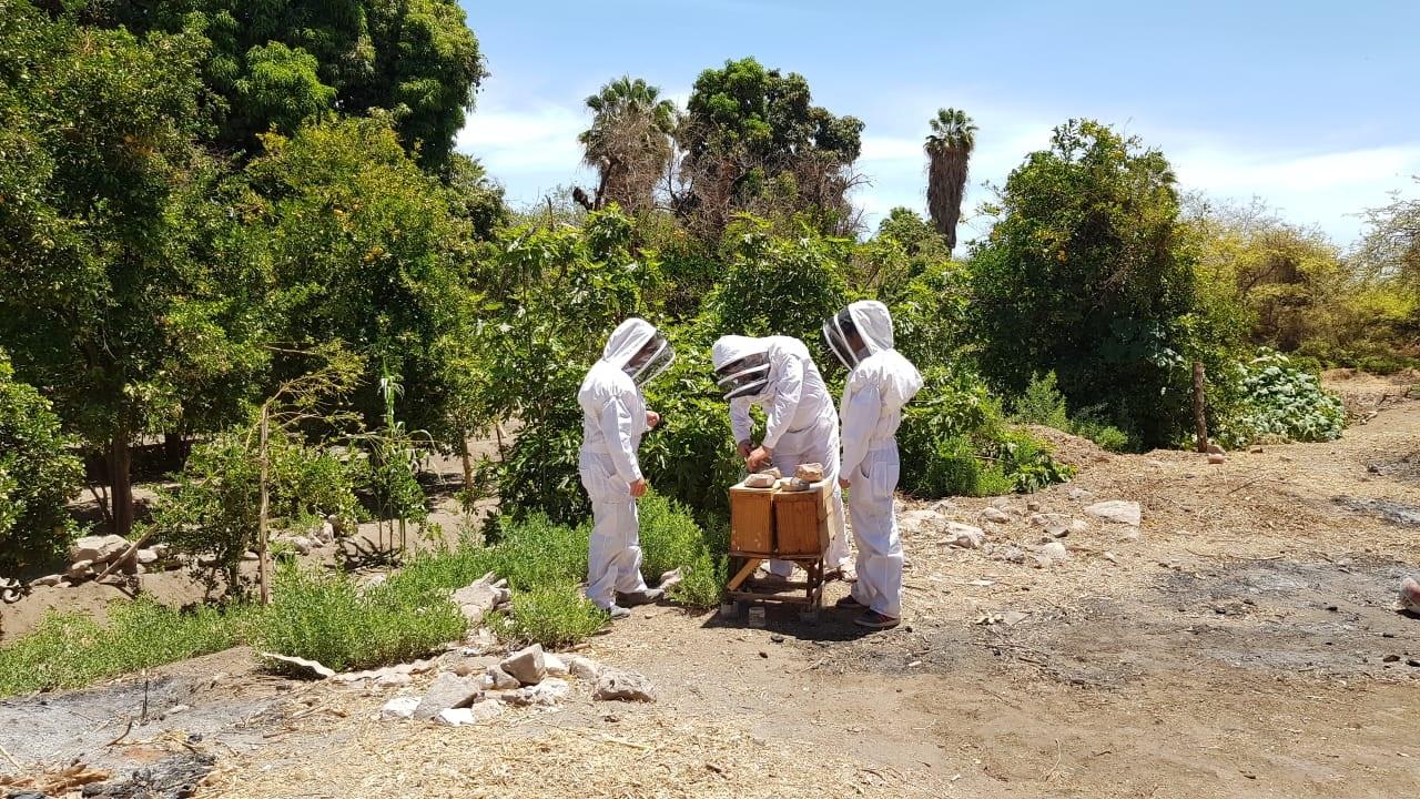 abeja dani
