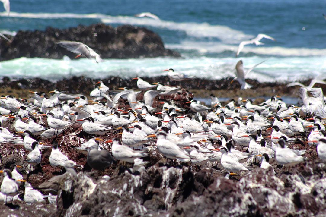 fauna-marina-cristobal-navarrete-2
