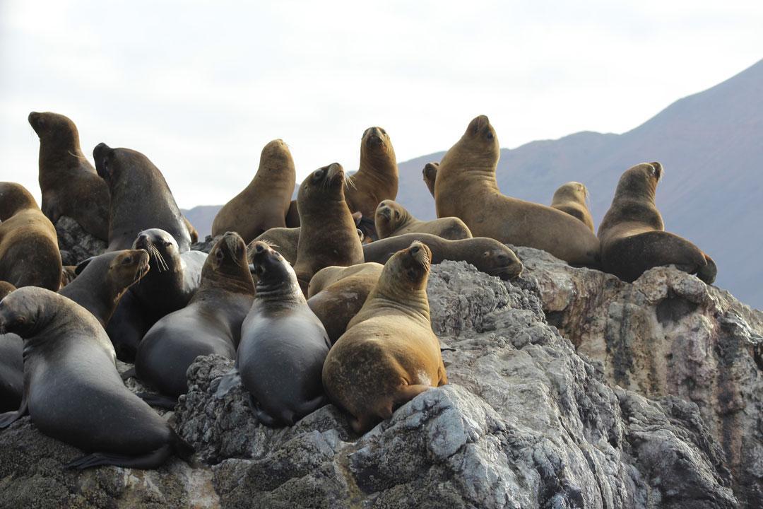fauna-marina-cristobal-navarrete-3