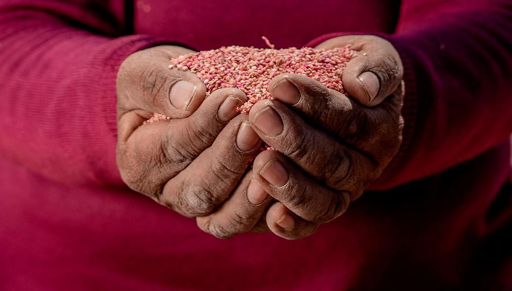 mano-quinua-WEB
