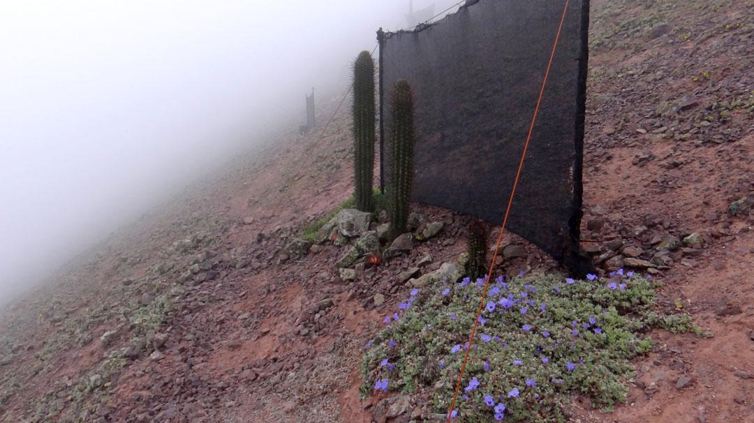 proyecto-cactus-raquel-pinto-octubre-2020.-70cm-de-alto