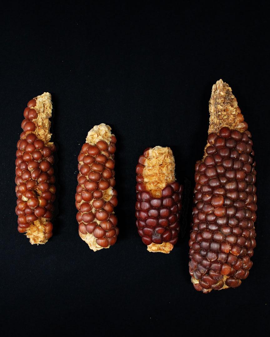Guano-Huano-agricultura-desierto-5